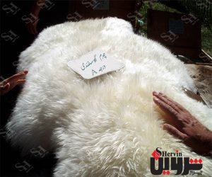 صادرات چرم گوسفندی