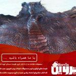 پوست چرم شترمرغ ایران