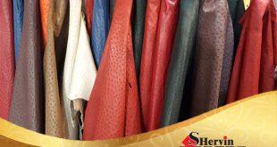 فروش چرم شترمرغ اصل در سراسر کشور